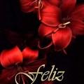 Imagenes De Flores Rojas Feliz Navidad