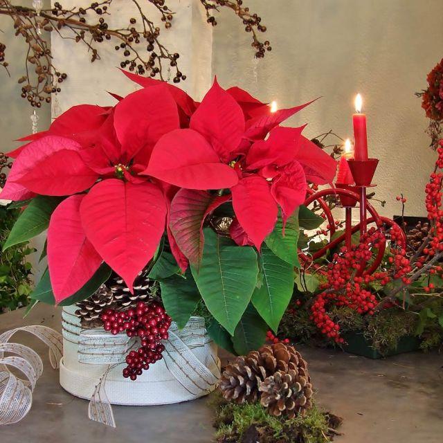 imagenes-con-ideas-de-decoracion-con-flores-ponsetias