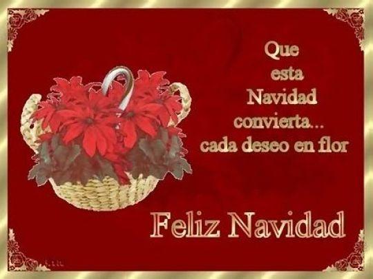 Tarjeta De Navidad Con Flores Navideñas Para WhatsApp