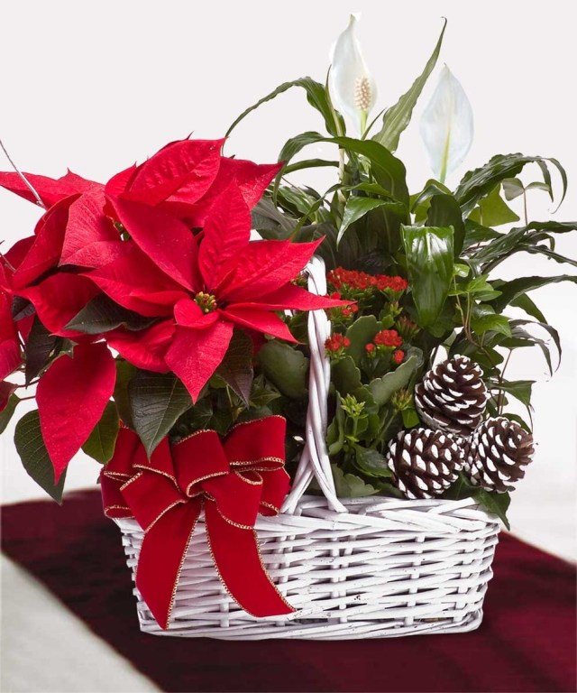 Ideas de arreglos de flores para navidad con poinsettias