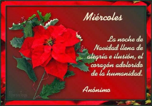 Imagen con flores y mensaje navideño para el miércoles
