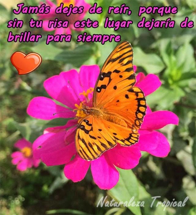 imagenes-de-flores-con-mensajes-de-amor-para-enviar-por-whatsapp