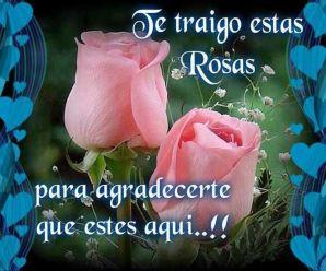 Imagenes De Flores Con Versos De Amor Para Dedicar