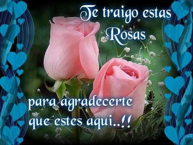 imagenes-de-rosas-rosadas-para-con-dedicatorias-de-amor-para-regalarle-a-mi-novia