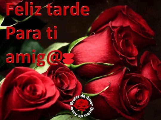 Rosas rojas feliz tarde amigos