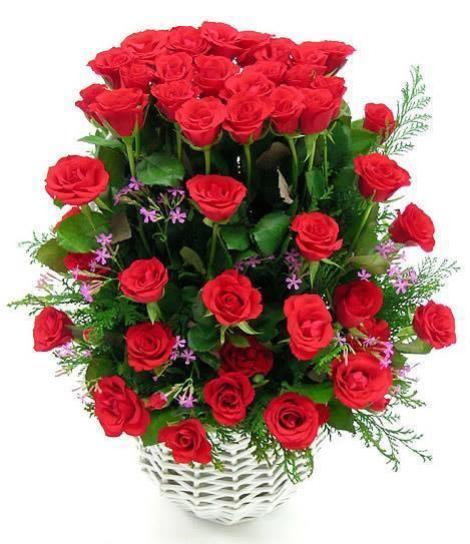 imagen de hermosas rosas rojas para regalar a mi novia el día de san valentín
