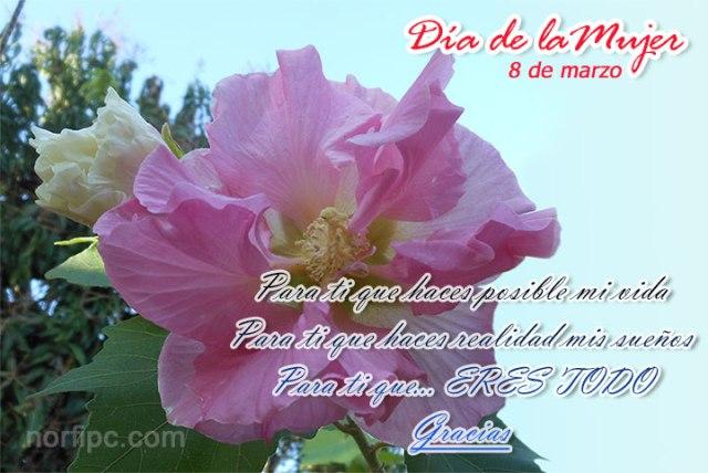 Imagen de flores para el 8 de marzo día de la mujer