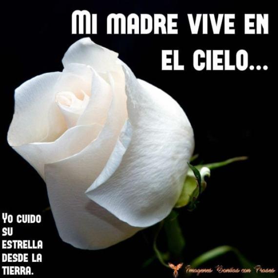 Una rosa blanca para mi madre que vive en el cielo