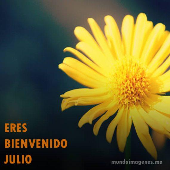 Flor amarilla bienvenido julio