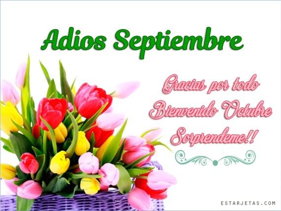 Ramos de flores bienvenido octubre