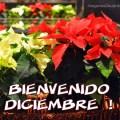 Imagenes De Flores Bienvenido Diciembre Para Enviar