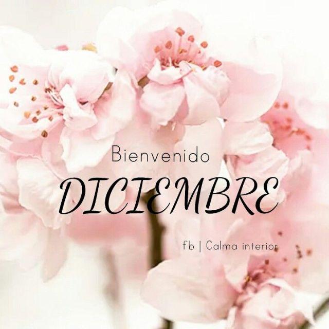 Flores con Bienvenido Diciembre