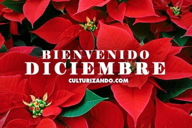 Flores de Navidad Bienvenido Diciembre