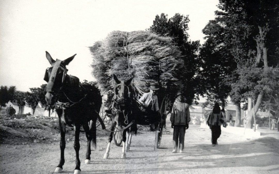 Linde del Paseo de Rojas 1910