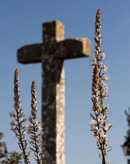 Cruz Santuario