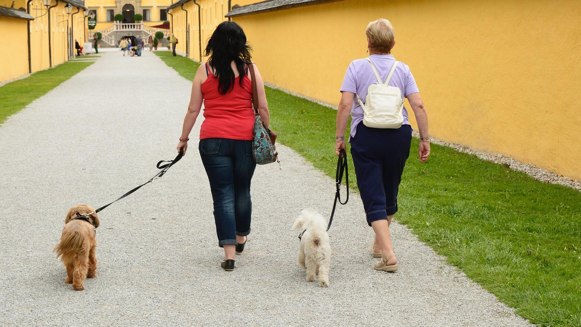 9 de cada 10 usuarios prefieren ir de vacaciones con su perro