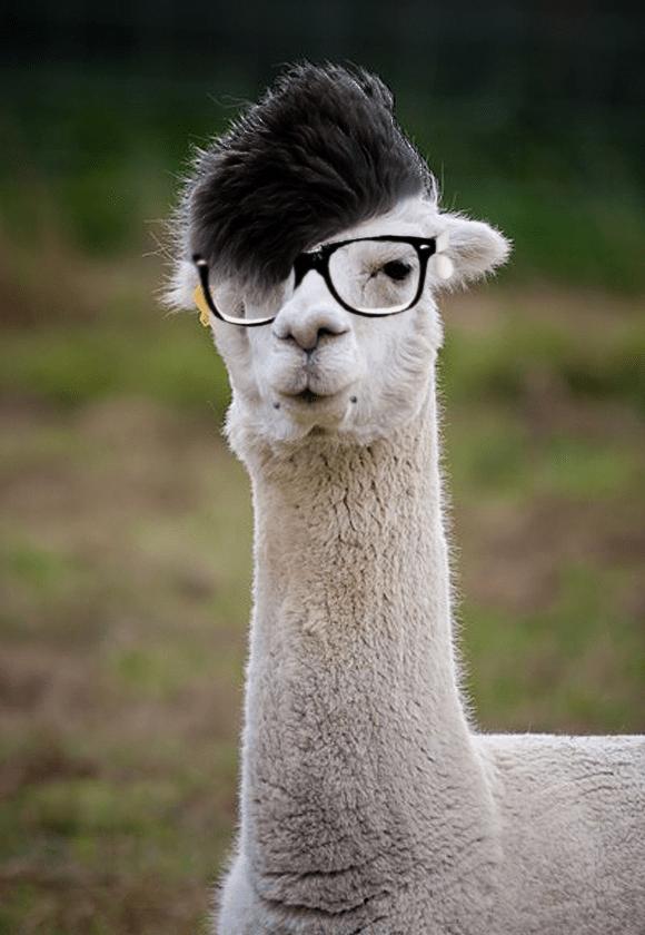 Imagenes Llamas Hipster