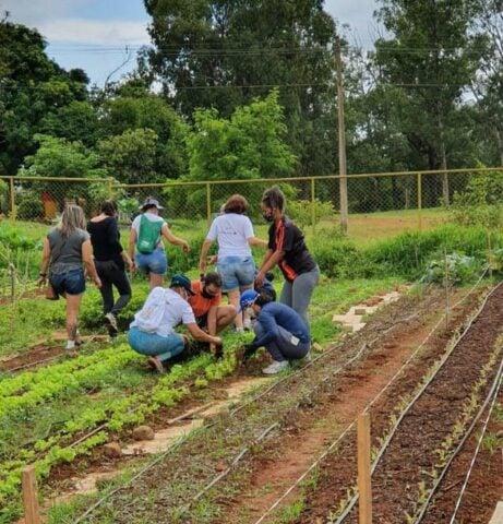 Horta Comunitária do Guará (DF)
