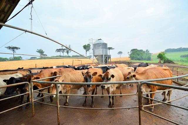 produtores de leite que tiram férias