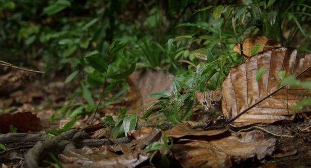 O menor gato do mundo é ridiculamente fofo e temos fotos para provar 01