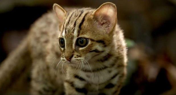 O menor gato do mundo é ridiculamente fofo e temos fotos para provar 06