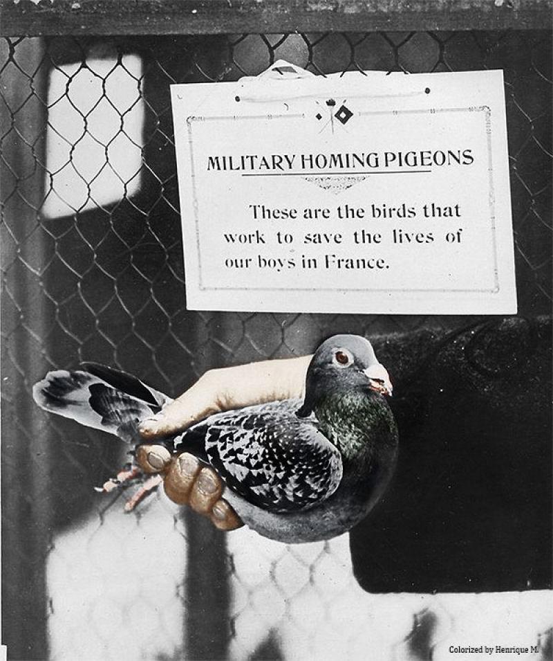 Fotos colorizadas trazem Primeira Guerra à vida 77