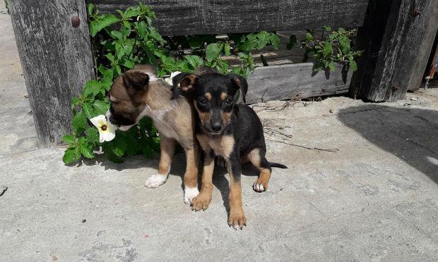 ONG abriga cães de rua em São José do Egito / Foto: reprodução/Facebook