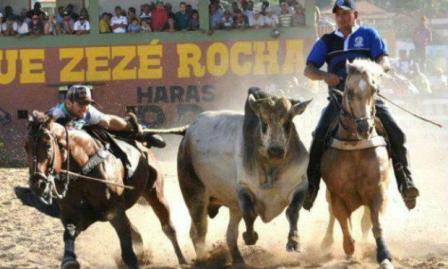 A vaquejada é uma tradição nordestina em que 2 vaqueiros tentam derrubar o boi em uma área delimitada / Foto: Reprodução