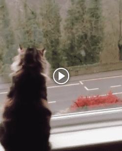 Esse é o gatinho mais simpático que você já  viu