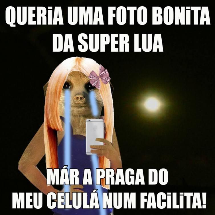 Memes Divertidos para Mijar de Rir e Compartilhar no WhatApp com suricate