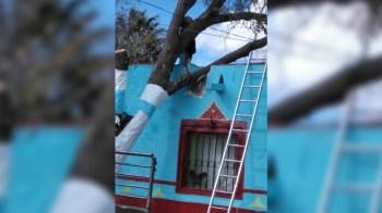 Caen árboles, cables, enjarres y postes en Jerez