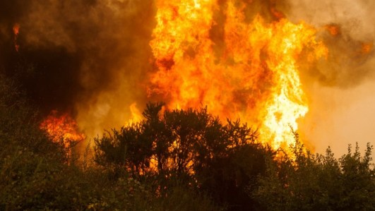 Registra Protección Civil 4 incendios forestales al día
