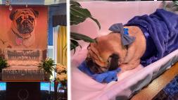"""""""Corre libre, Dexter"""", hombre organiza un funeral para despedir a su mascota"""