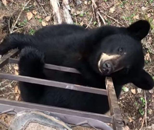 Viralhog The Black Bear