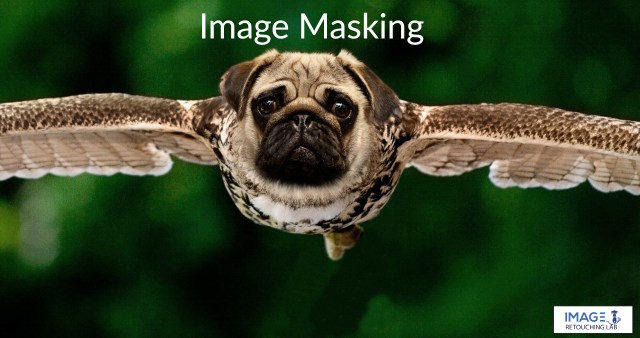 Exchange owl head to dog head with image masking