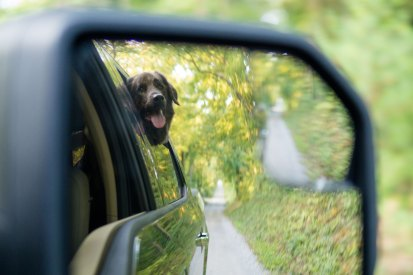 A dog photographed in the rearview mirror of a truck.