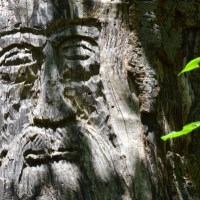 Green Man in the Woods