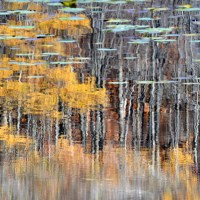 Pond Abstract II