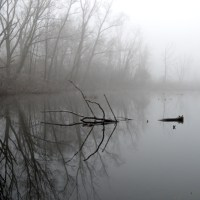 Fog on Walker's Pond