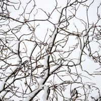 Bright Branches