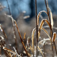 Sparkling Brown Grass