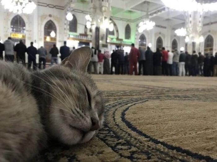 Why do Muslims let cats inside the mosque but no doggo ? - 9GAG