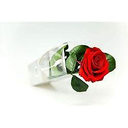Rose-Te-Amo Vera rosa imperforabile (27,5 cm di altezza) -3 anni di conservabilità senza acqua - con biglietto d'auguri scaricabile conservata - rosa eterna, rosso