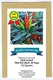 Ein extrem scharfes Chili mit Ursprung in Thailand - Thai hot chili - 10 Samen