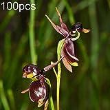 XdiseD9Xsmao 100 Unids Flying Duck Orquídea Semillas De Flores Semillas De Plantas Home Garden Yard Balcón Planta DIY Bonsai Adorno Decoración Semillas de orquídeas Pato Volador