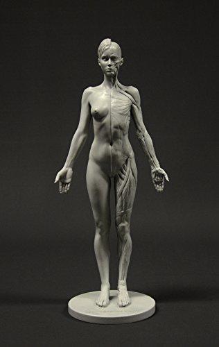 Figura anatomía de una mujer: paleta de albañil, 28cm, figura de referencia anatómicos (gris)