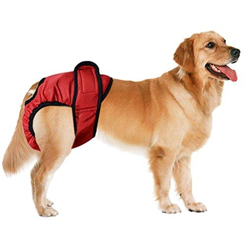 D DOLITY Cani Mutandine Sanitari Pantaloni per Cane Piccolo Cucciolo Regolabile - Rosso, L