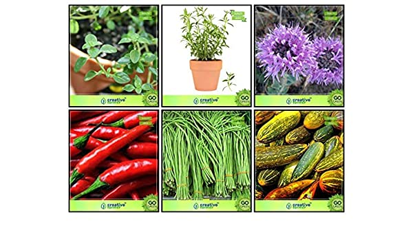 Creative Farmer Seeds Online India Combo Vegetable Seeds Herb Seeds Thyme English Winter Terragon Penny Royal Chilly Cowpea Vj Cowpea Anaswara Terrace Gardening Amazon In Garden Outdoors