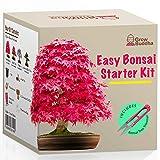 WACHSEN SIE IHREN EIGENEN BONSAI BAUMSTARTER KIT - Alles, was Sie brauchen, um 4 Arten von Bonsai-Bäumen zu wachsen: Grow Buddha Bonsai Starter Kit enthält alle Gegenstände, die Sie jemals benötigen, um Ihren eigenen Bonsai-Baum aus Samen zu züchten....