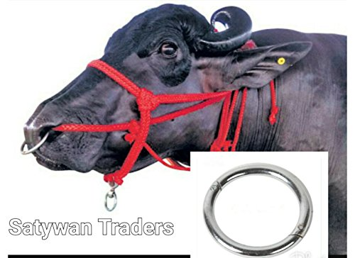Satywan Traders Silver Stainless Steel Nose Ring for Bull Cow